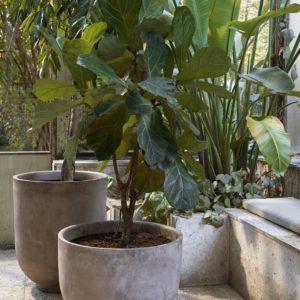 Planter SC43 og SC44